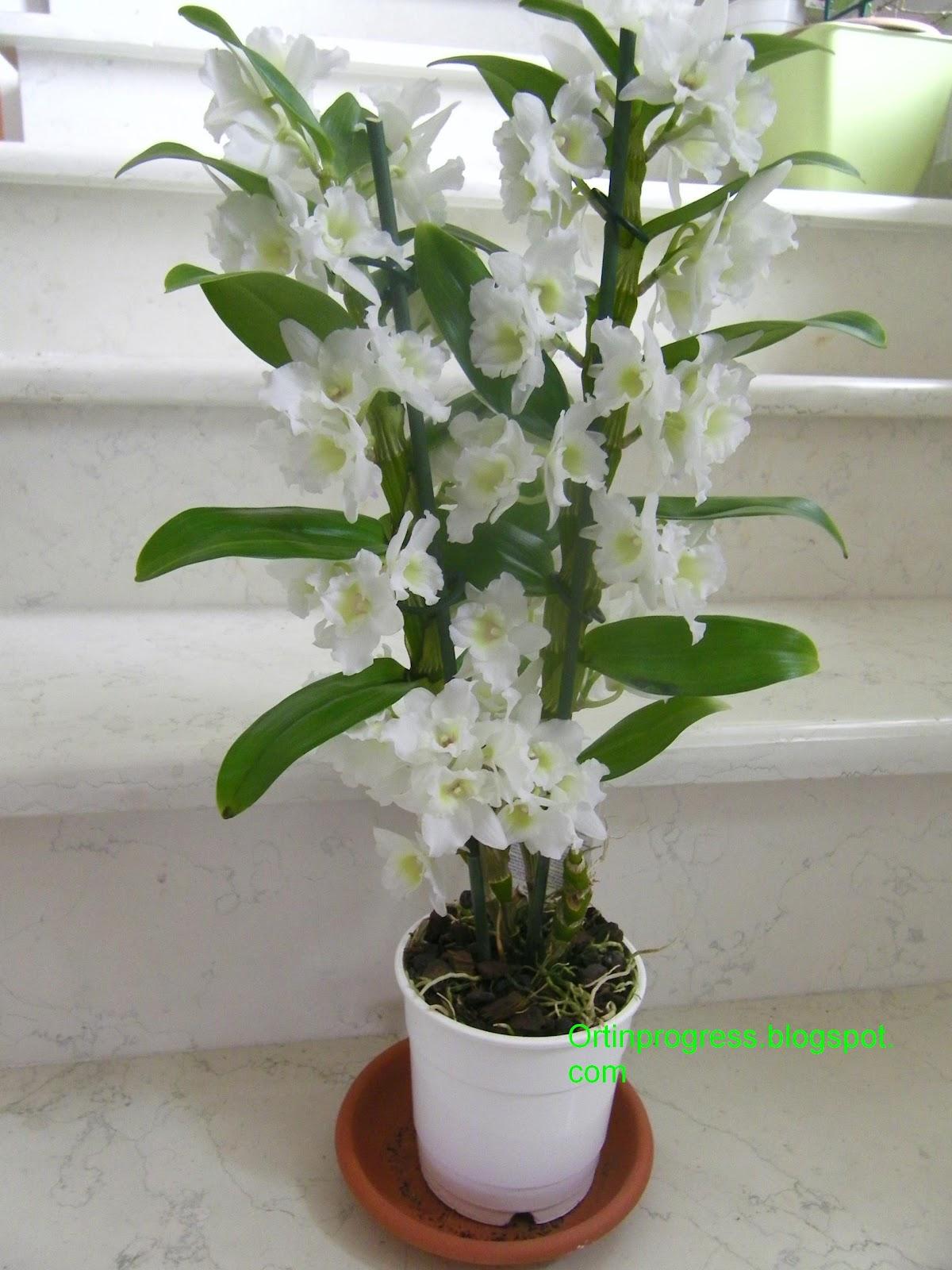 M m gardening sfagno terapia o cotone terapia for Vaso orchidea