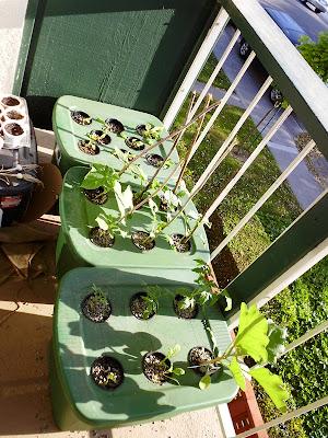 Kratky Garden overview