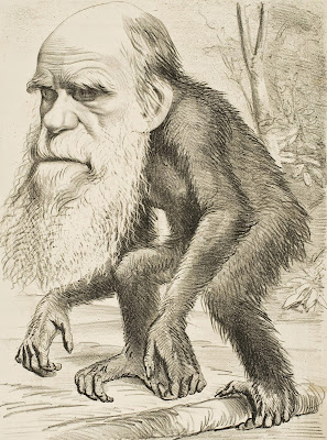 Darwin,caricatura,evolucion,mono