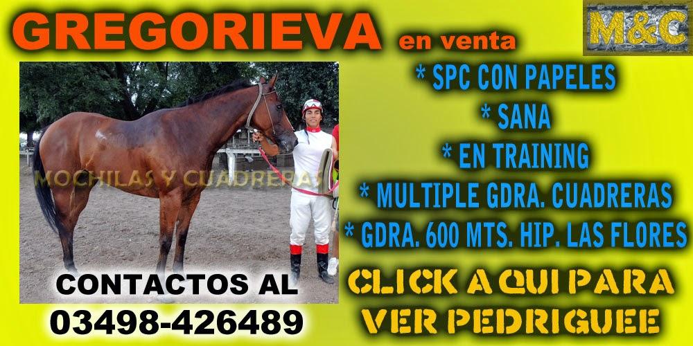 GREGORIEVA - 08/04/15