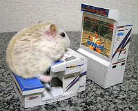 White rat at tiny computer