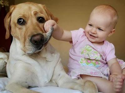 El perro y un nuevo hijo