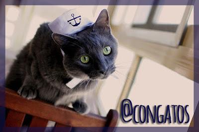 Gato marinero congatos gatera rumbo