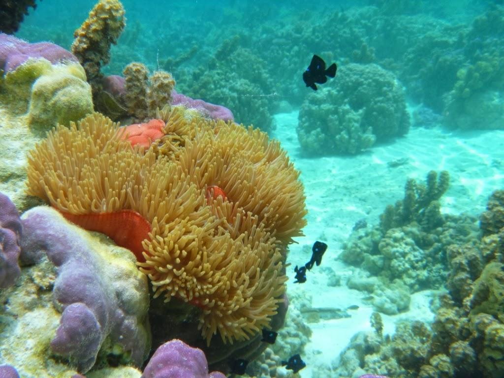 Tahaa - Polynésie