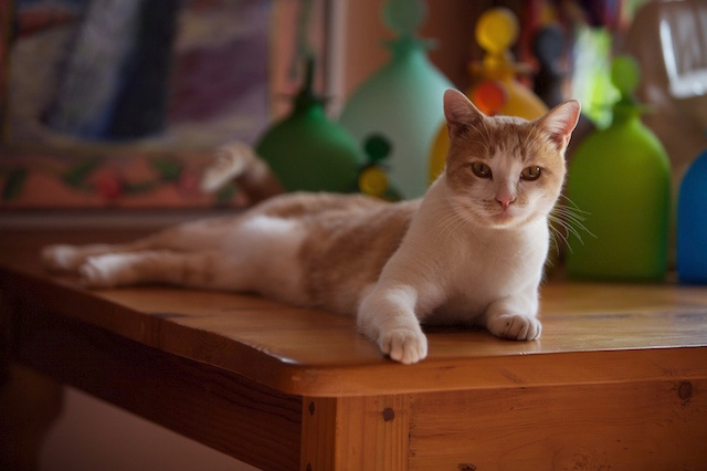 common cat health issues