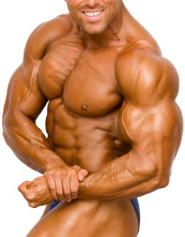 Muscle Bodies