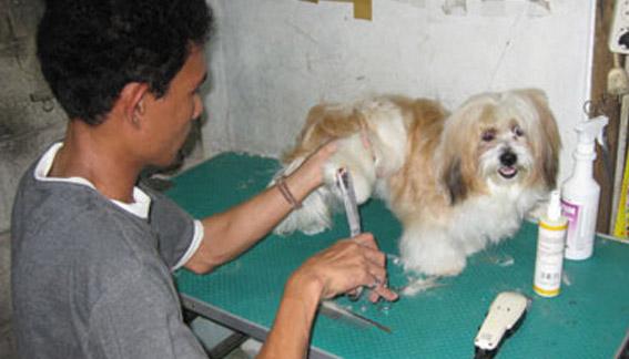 Usaha salon hewan panggilan