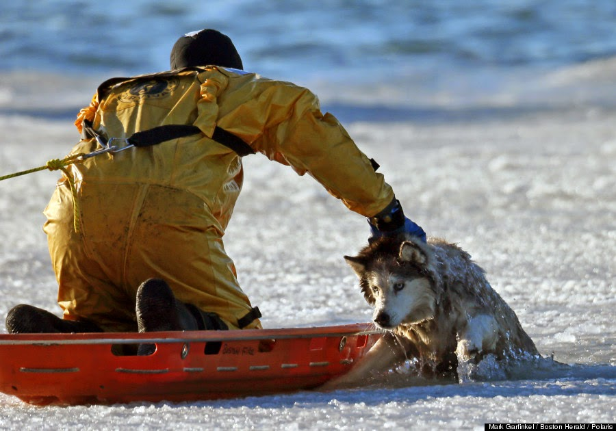 At one point, even Sean fell in the water during the rescue. - A Family Thought Their 13 Year Old Husky Was Doomed After Falling Through Ice… Till This Happened.
