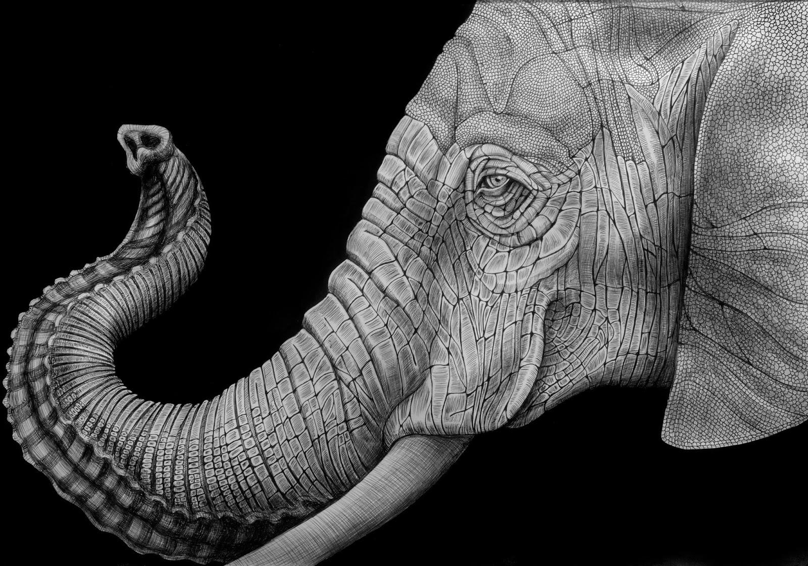 elephant face drawing - photo #23