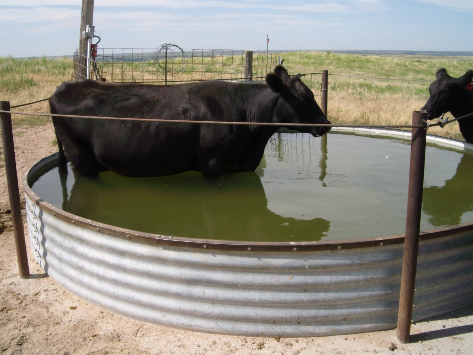 how to keep water from freezing for livestock