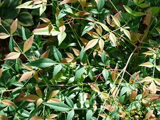 mystery shrub 3