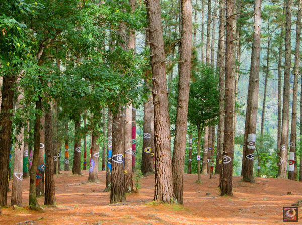 El Bosque Animado de Oma en Kortezubi (Bizkaia)