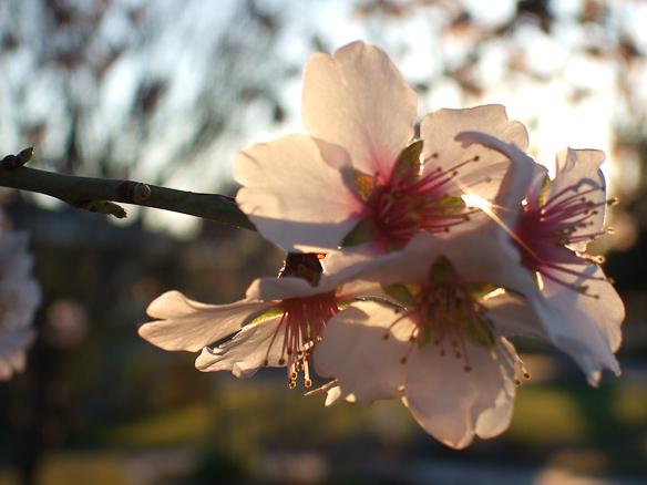 Fresno State, Fresno, CA, flowers