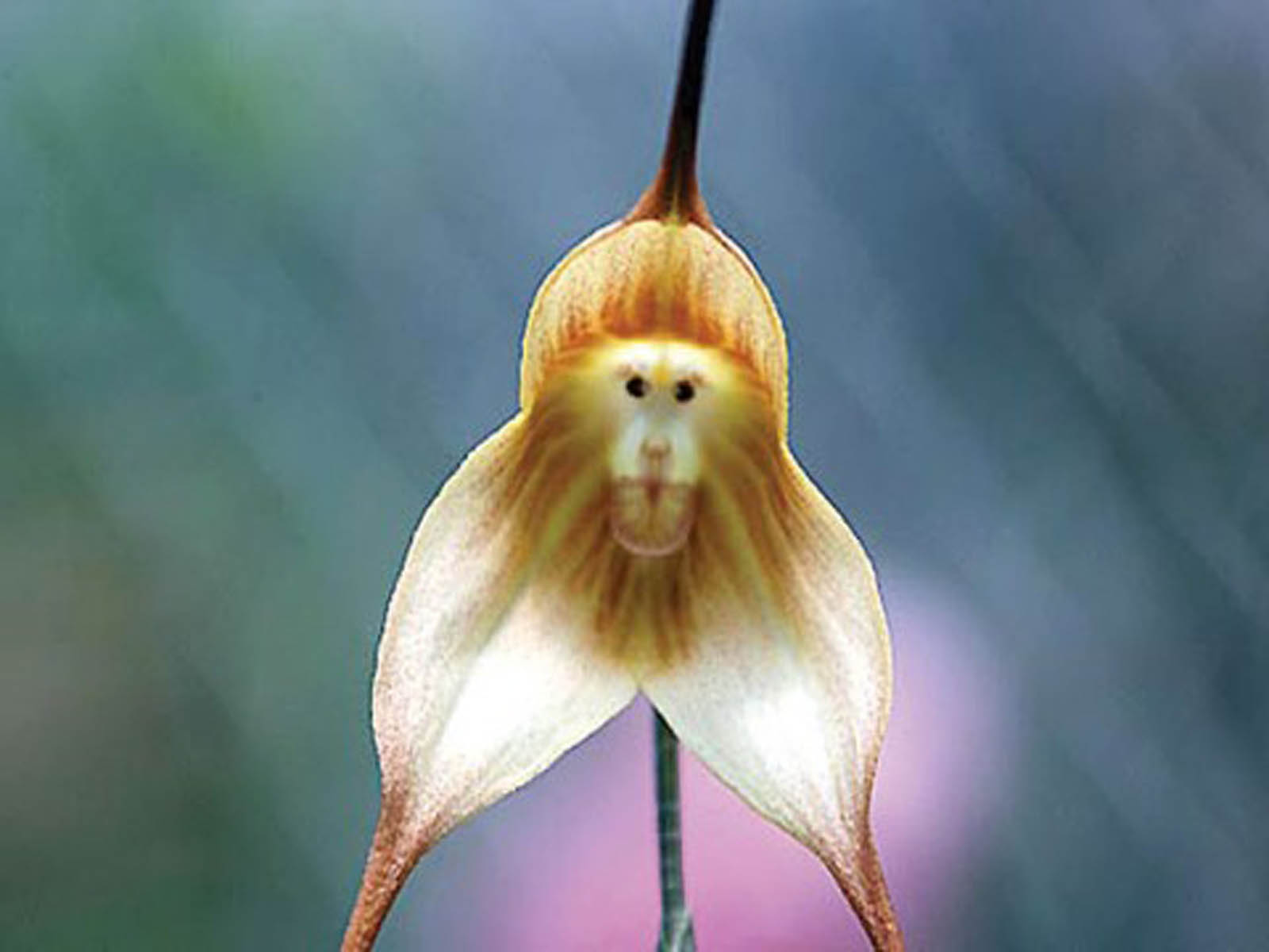 Monkey Flowers Wallpapers HD Wallpapers