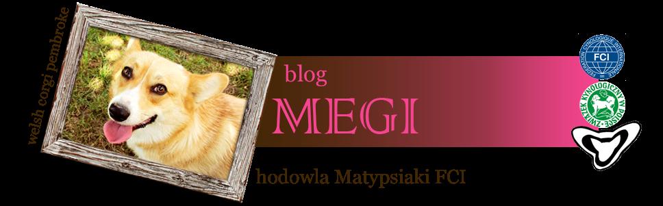Megi - welsh corgi pembroke