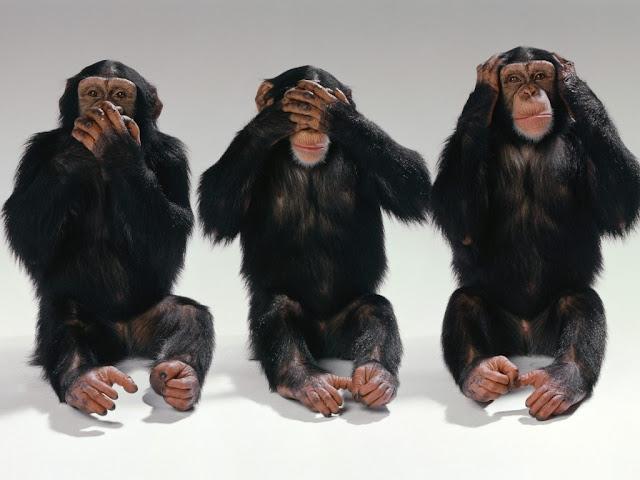 Soñar con monos ¿Que Significa?