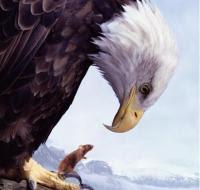 A águia é uma ave que chega a viver até 70 anos. Mas, para chegar a essa idade, ela tem de tomar um