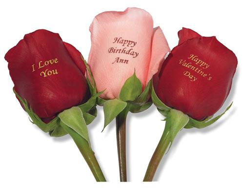 Red Roses I Love U