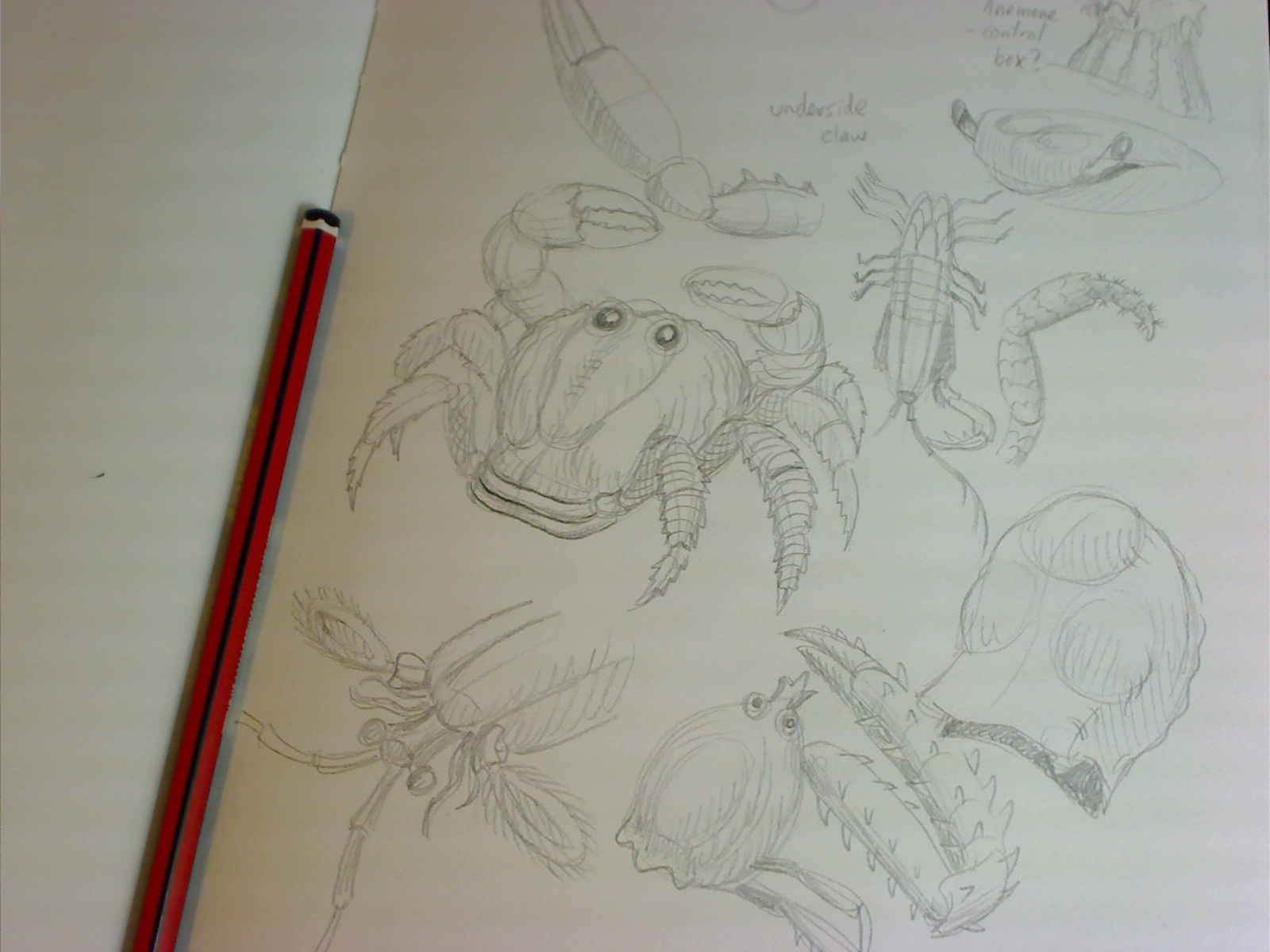 studying crustaceans in my sketchbook