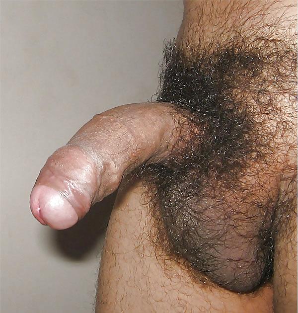 Fotos de pussys peludos