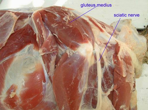 how to give subcutaneous injection to a cow