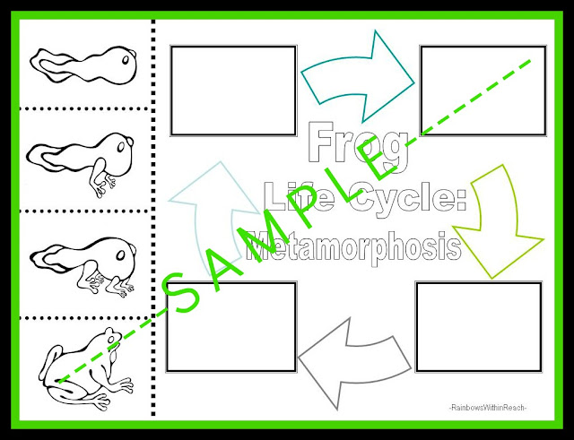 photo of: Fine Motor Worksheet for Frog Life Cycle