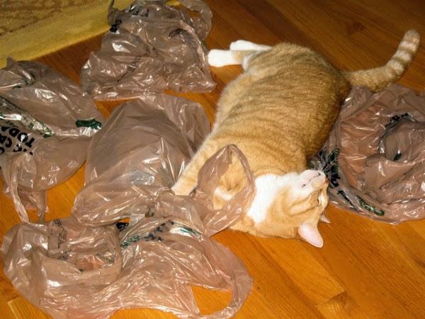 7 Alasan kenapa kucing suka menjilati kantong plastik