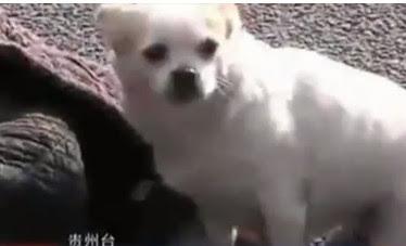 perrito cuidando a su dueño desmayado