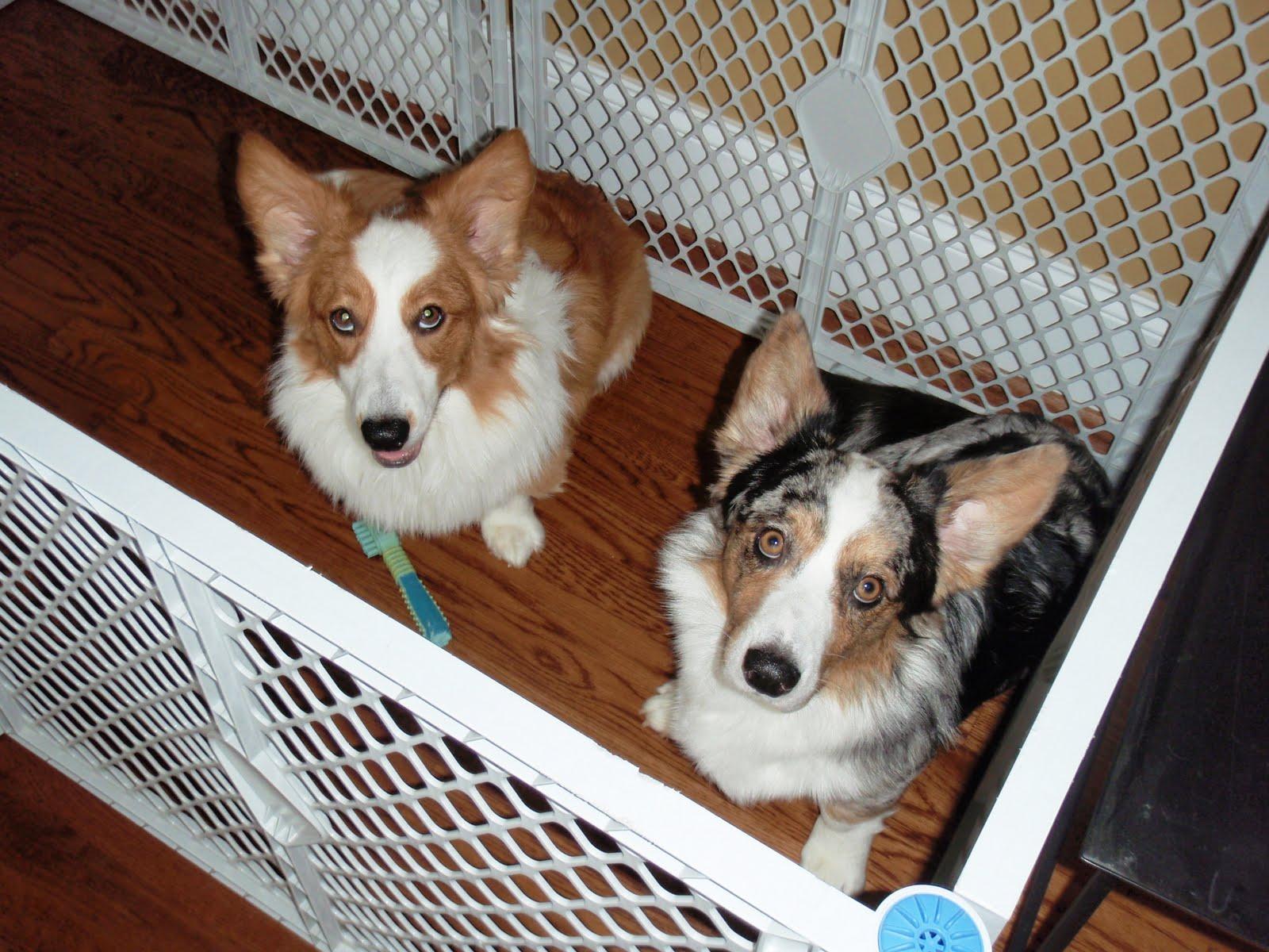 Dog House Freedom Without Damage