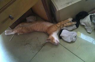 kucing anak madura