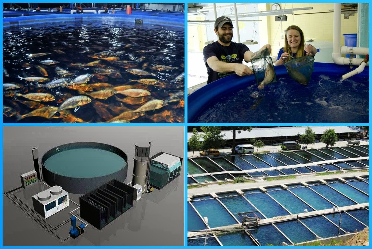 Fish Farming | Business Ideas