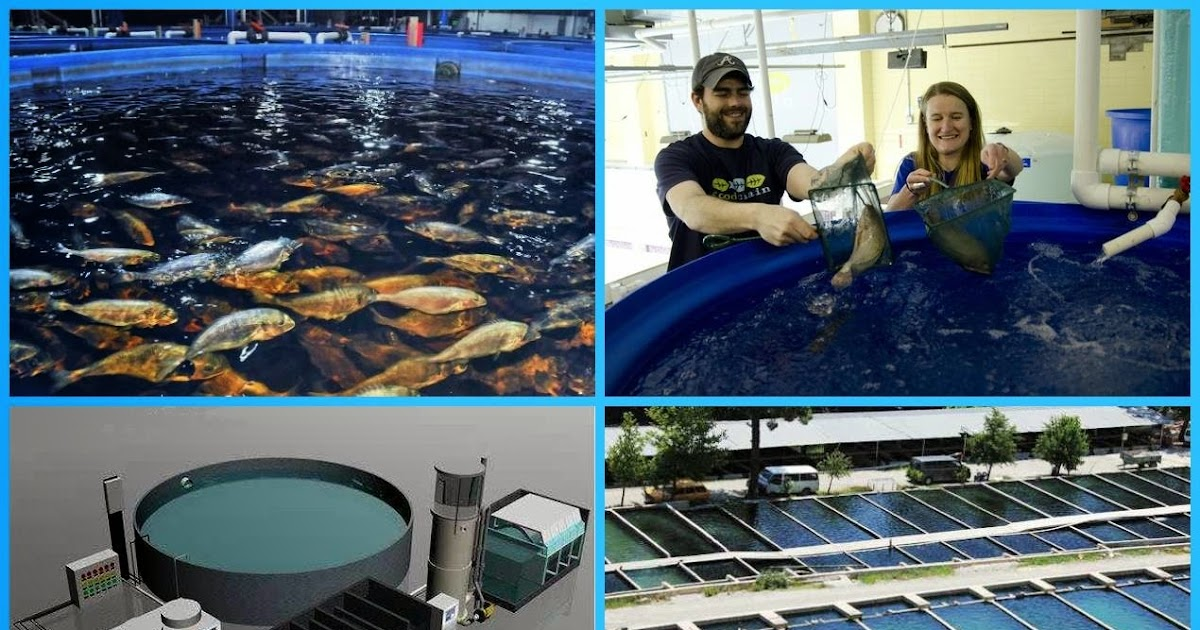 fish farming and fishery business management Aquaculture is defined by the fisheries management act as cultivating fish or  marine vegetation for the purposes of sale, trade or barter aquaculture is also.