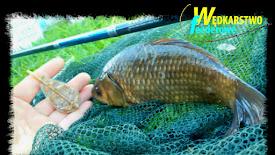 Łowienie na metodę podajnikiem zamontowanym przelotowo- Dzika woda