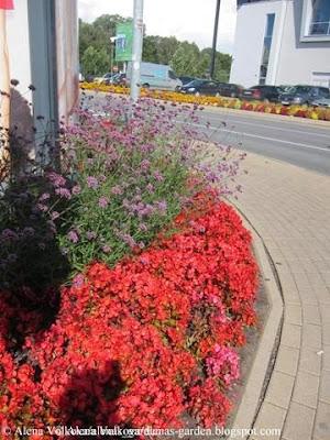 вербена, Verbena bonariensis, бегония, красная, вечноцветущая, Begonia semperflorens, , торговый центр, Рига