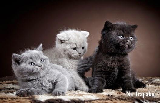 Kolory futra u kotów