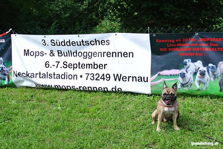 3. Süddeutschen Mops- und Bulldoggenrennen