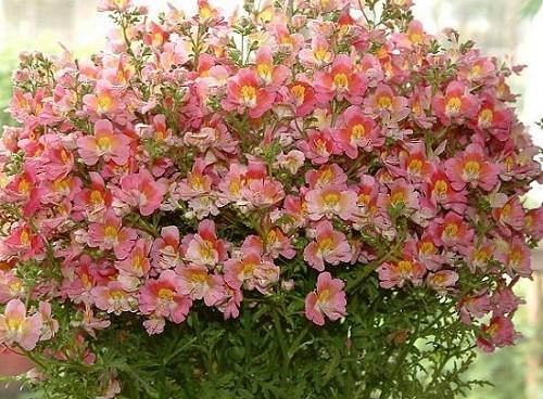 Flores que resistem ao tempo seco