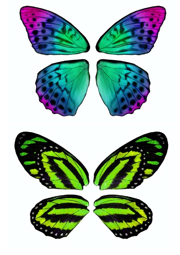 Dibujos y plantillas para imprimir alas de mariposas para - Plantillas de mariposas ...