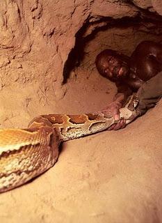 Gila !! Menangkap Anaconda Dari Sarangnya,,,