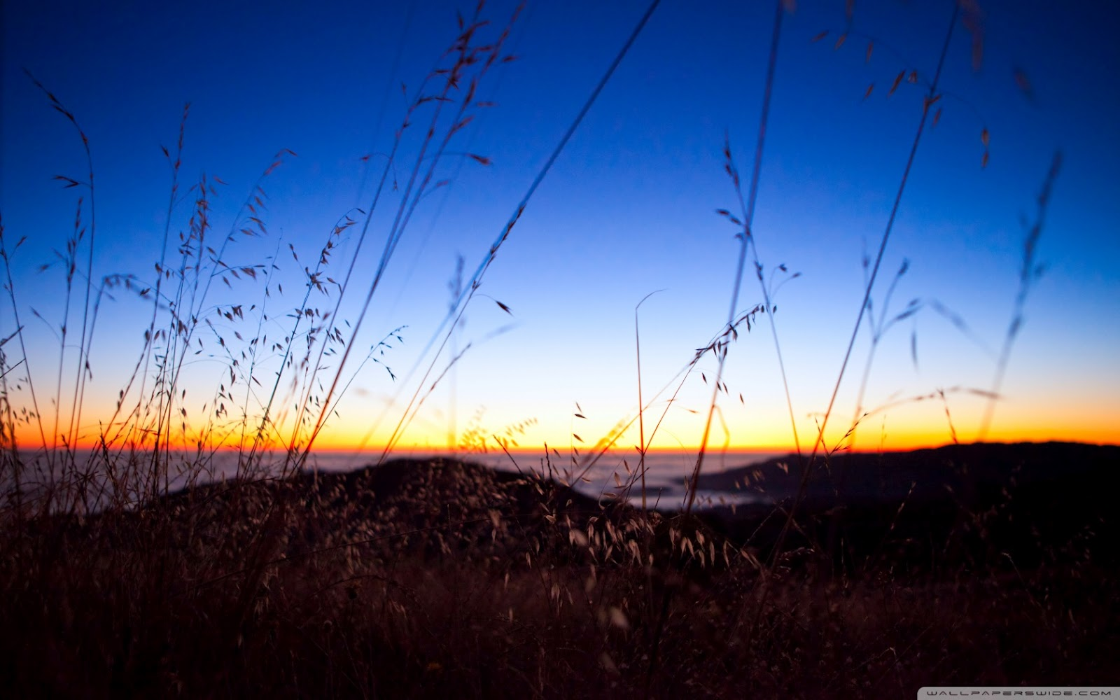 http://2.bp.blogspot.com/-HDS4tnvFqOE/T3oHa3YOmgI/AAAAAAAAE7I/EVTWLIIW30U/s1600/bokeh_sunset-wallpaper-1680x1050.jpg