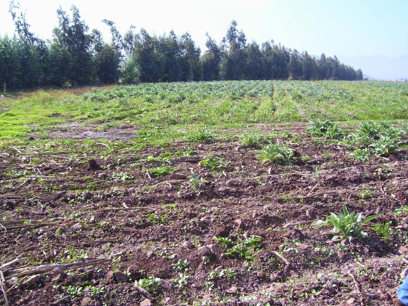 Plantas flores y cultivos: Preparación de suelo para variedad de ...
