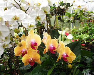 A greenhouse full of orchids.