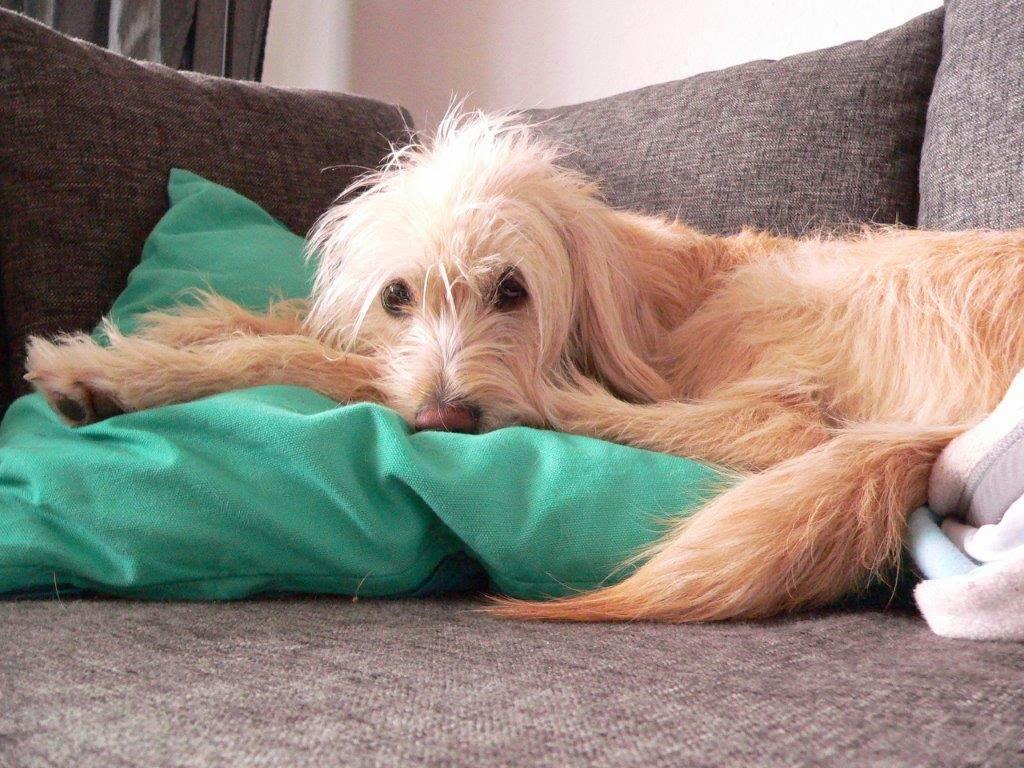Hund Entspannung