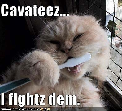 Funny Pictures Cat Brushes Teeth
