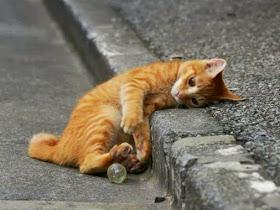 ricordo gatto mao