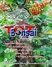 DR 15 TOT Bonsai