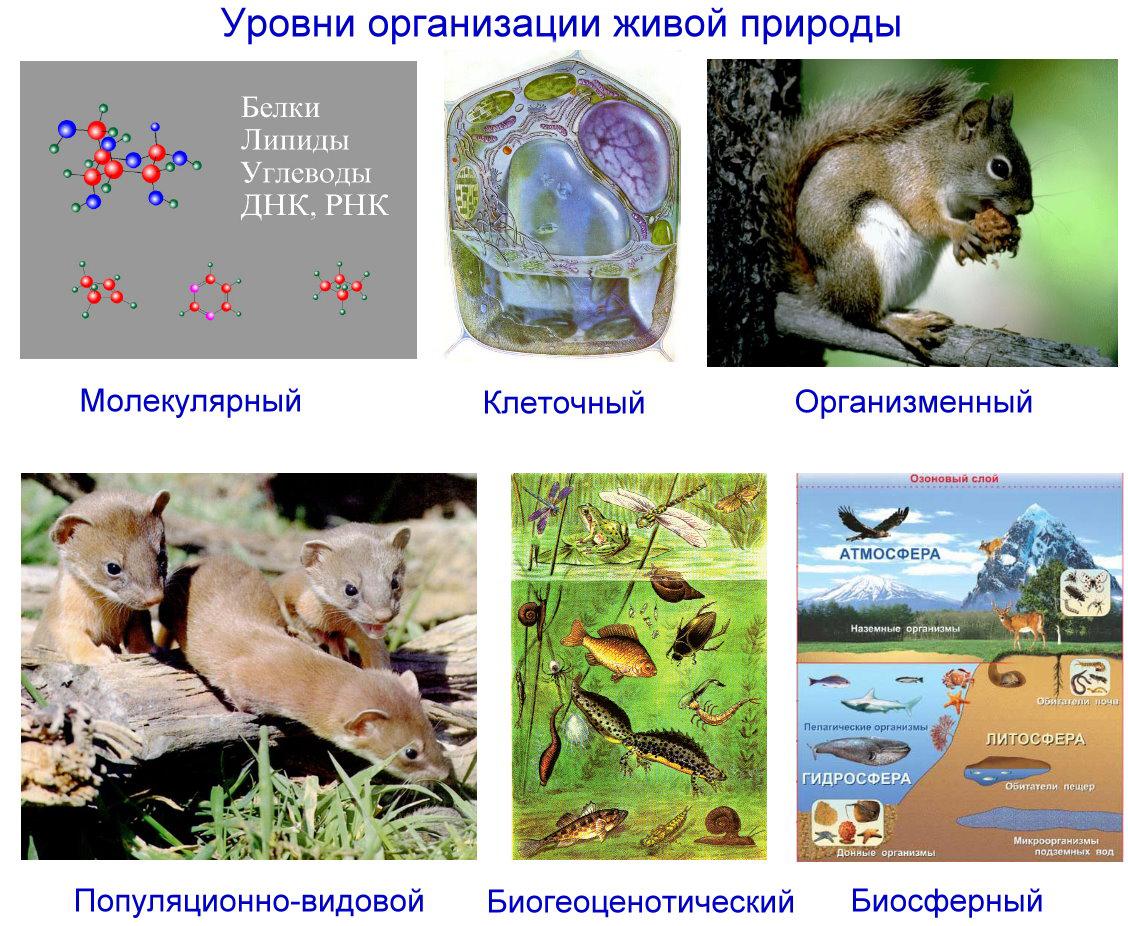 урок презентация молекулярный уровень жизни 9 класс биология