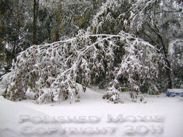 Picture of tree bending to the ground 5 hours into a snowstorm.