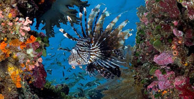 Coral reefs in the Wakatobi, scuba diving in Wakatobi, underwater paradise, Wakatobi island