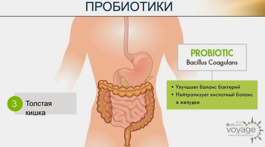 корень одуванчика от холестерина